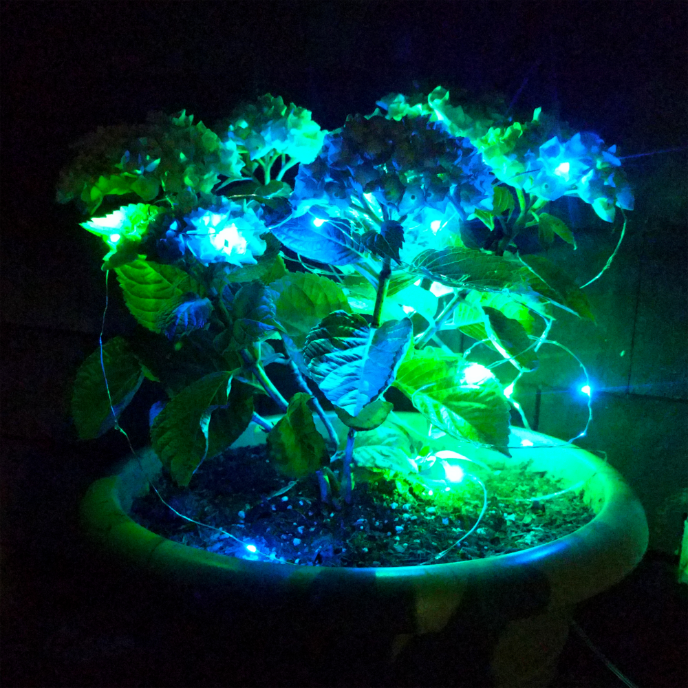 Solar Powered LED Fairy Lights - 33 Foot - Waterproof with ...